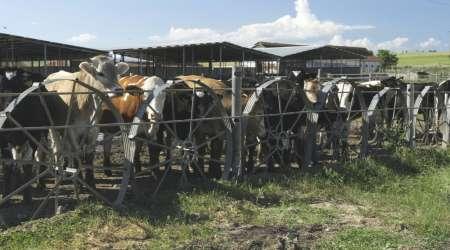livestock production 6
